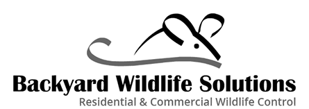 Backyard Wildlife Solutions - Residential & Commercial Wildlife Control