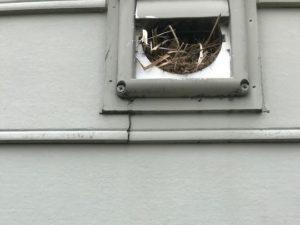birds nest in vent