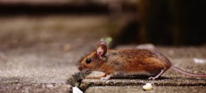 mouse_on_ground